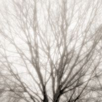 Winter Tree, Morning Light (2011) by Jeffrey Conley