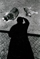 Untitled (Self Portrait with Dogs) (c. 1977) by Daido Moriyama