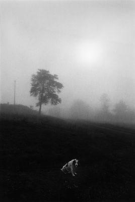 Culpeper, Virginia, Spring (1963) by Dave Heath