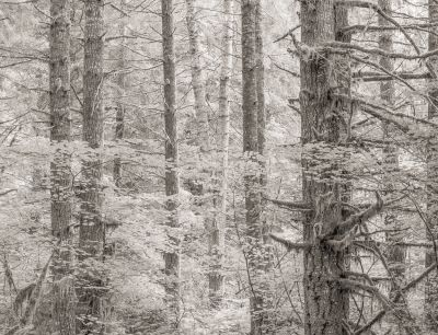 Alsea Forest (2013) by Jeffrey Conley