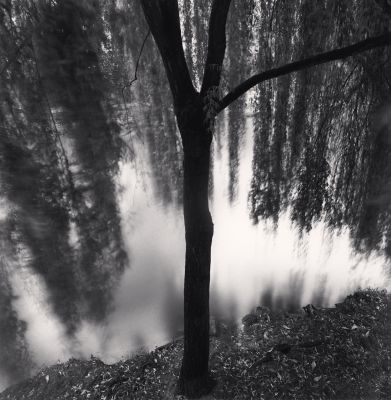 River Willow, Study #1, Strasbourg (1993) by Michael Kenna