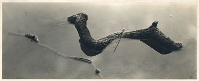 Untitled (branches in water) (1940s) by Harry Callahan