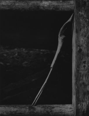 Untitled (branch) (1945) by Aaron Siskind