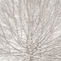 Suspended Snow (2014) by Jeffrey Conley