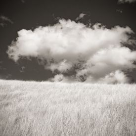 Grasses and Clouds (2015) by Jeffrey Conley