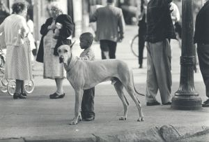 Black Boy and Great Dane, Harlem (ca. 1960) by George S. Zimbel