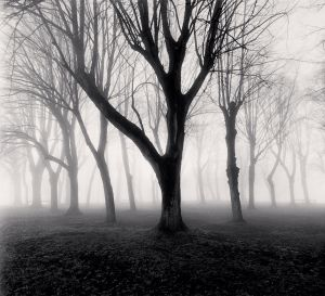Abbey Trees, Study 1, Vezelay, Bourgogne (1998) by Michael Kenna