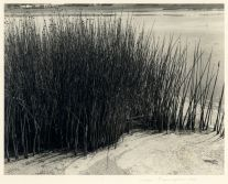 Reeds (1952) by Imogen Cunningham