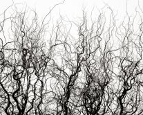 Liquid Willow Branches (2006) by Jeffrey Conley