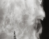 Tree and Waterfall, Yosemite (2019) by Jeffrey Conley