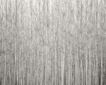 Wall of Poplars, Oregon (2016) by Jeffrey Conley