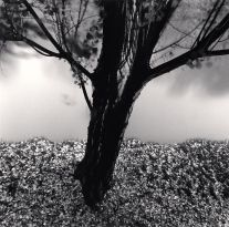 River Willow, Study #2, Strasbourg (1993) by Michael Kenna