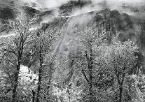 Trees and Cliffs of Eagle Peak, Winter, Yosemite Valley (c. 1935) by Ansel Adams