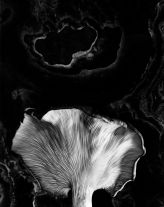 Fungus, Ipswich, Massachusetts (1962) by Paul Caponigro