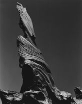 Driftwood Stump (1937) by Edward Weston