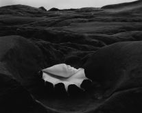 Shell and Rock Arrangement (1931) by Edward Weston