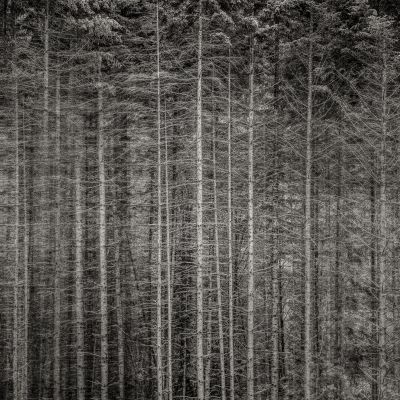 Forest Edge, Oregon (2013) by Jeffrey Conley