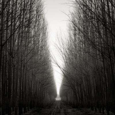 Road with Leaning Trees (2016) by Jeffrey Conley
