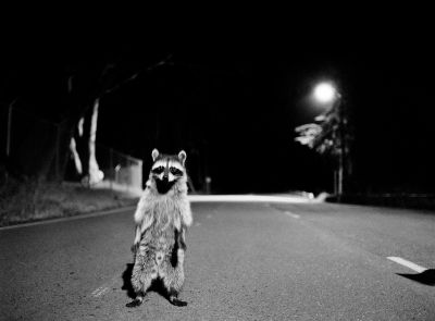Raccoon Costume (1999) by Corey Arnold