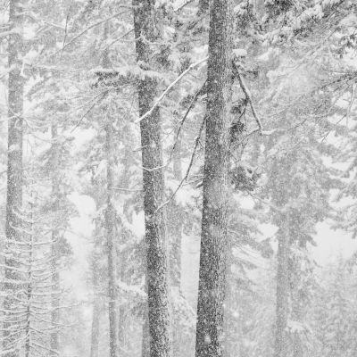 Two Trees and Falling Snow (2009) by Jeffrey Conley
