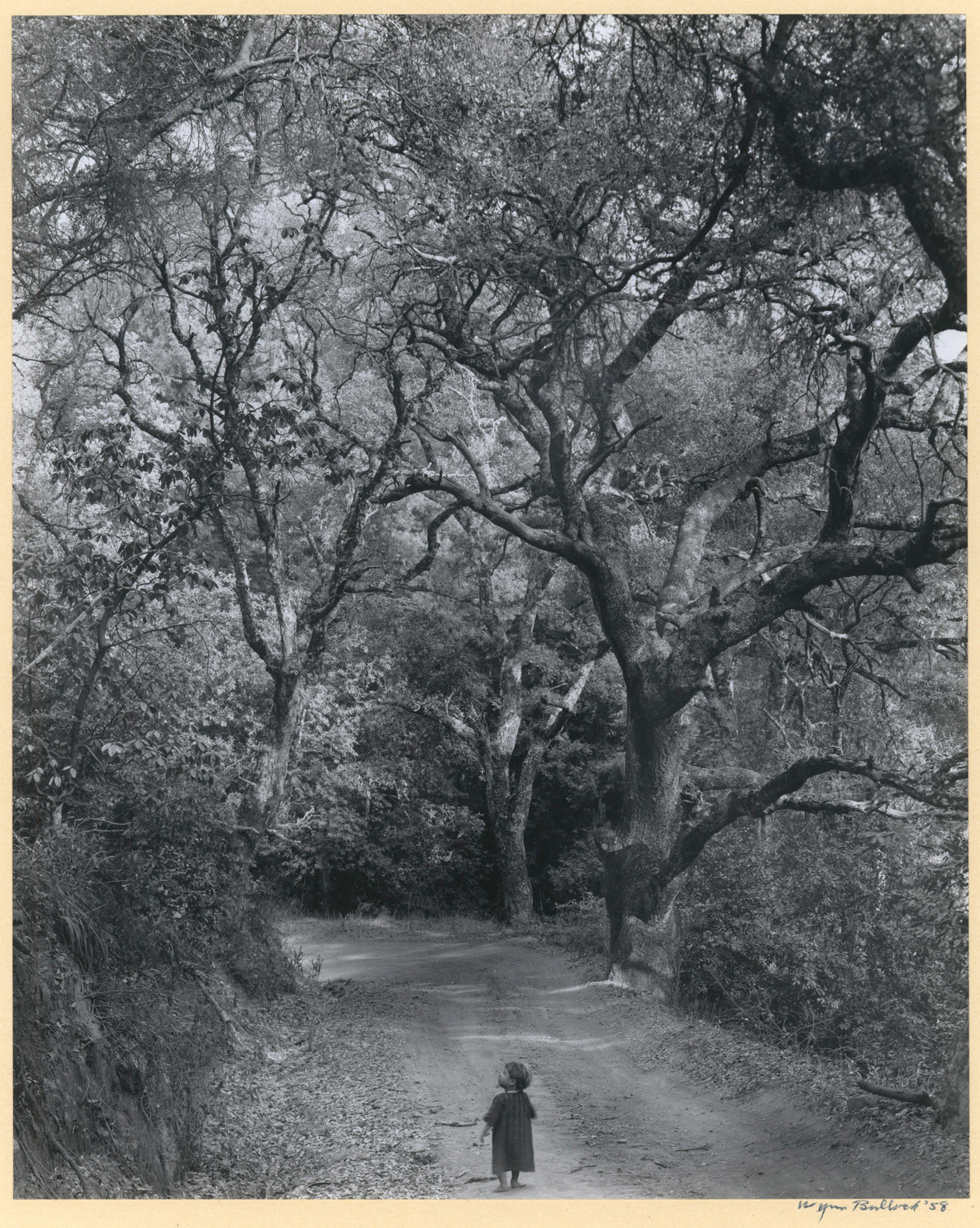 Child on Forest Road (1958) by Wynn Bullock