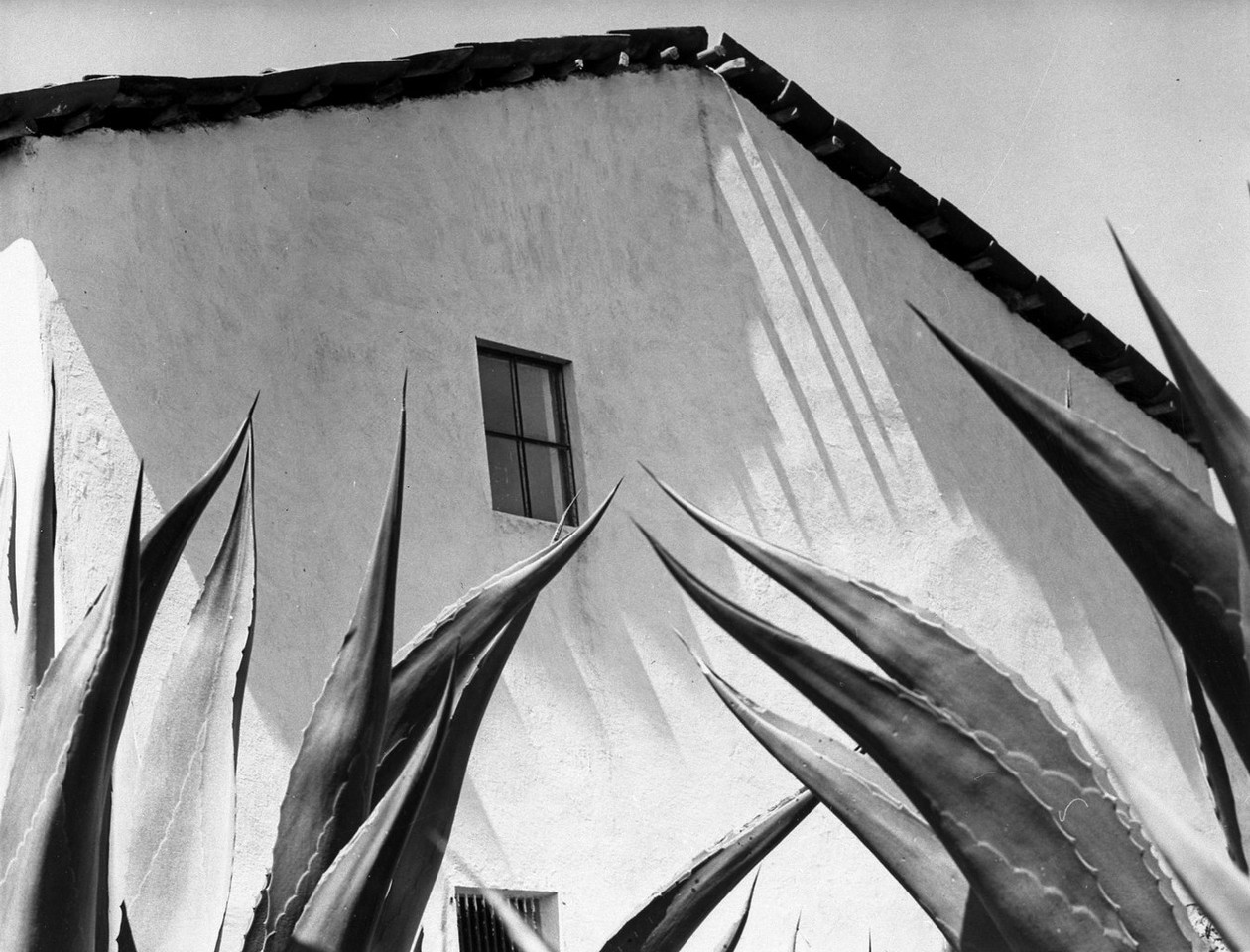 Window to the Agaves, Mexico (1974) by Manuel Alvarez Bravo