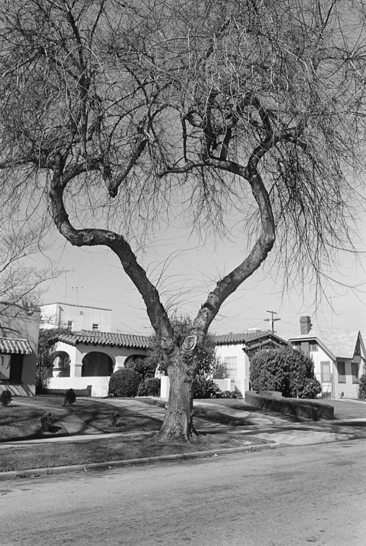 From Angel City West (heart tree) (1984) by Mark Steinmetz