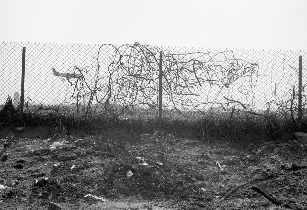 From Angel City West (airplane and vines) (1983) by Mark Steinmetz