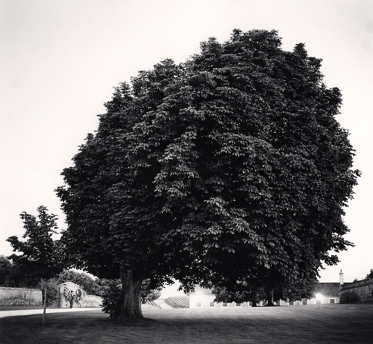 Chateau Lafite, Study 12, Bordeaux, France (2012) by Michael Kenna