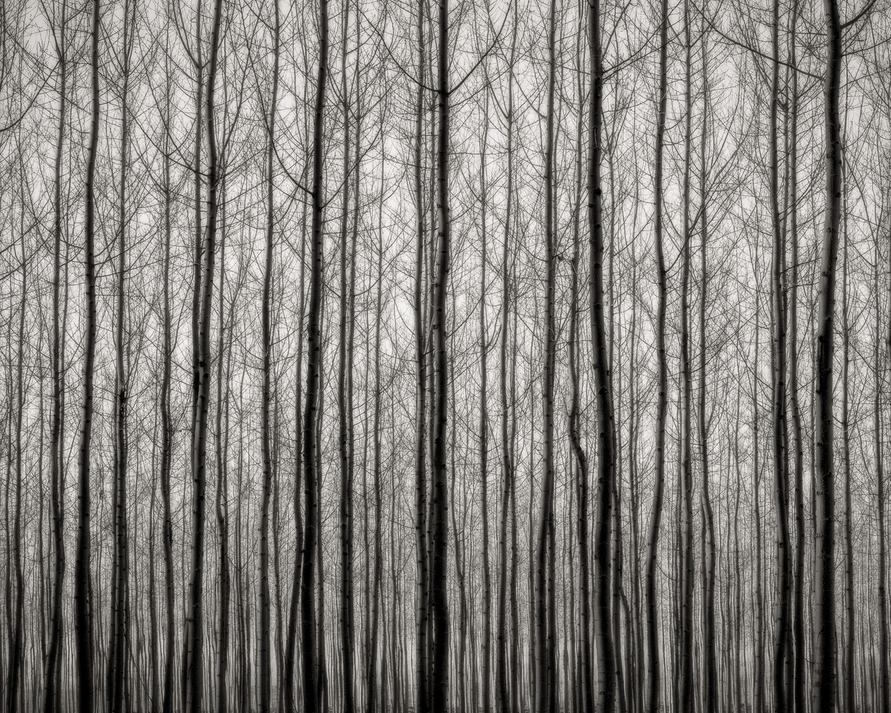 Early Evening Forest (2016) by Jeffrey Conley