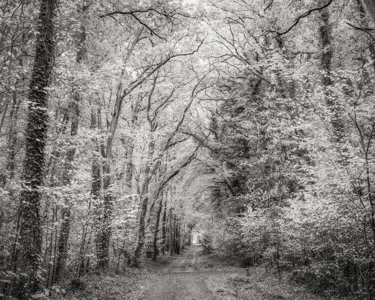 Forest Path, France (2018) by Jeffrey Conley
