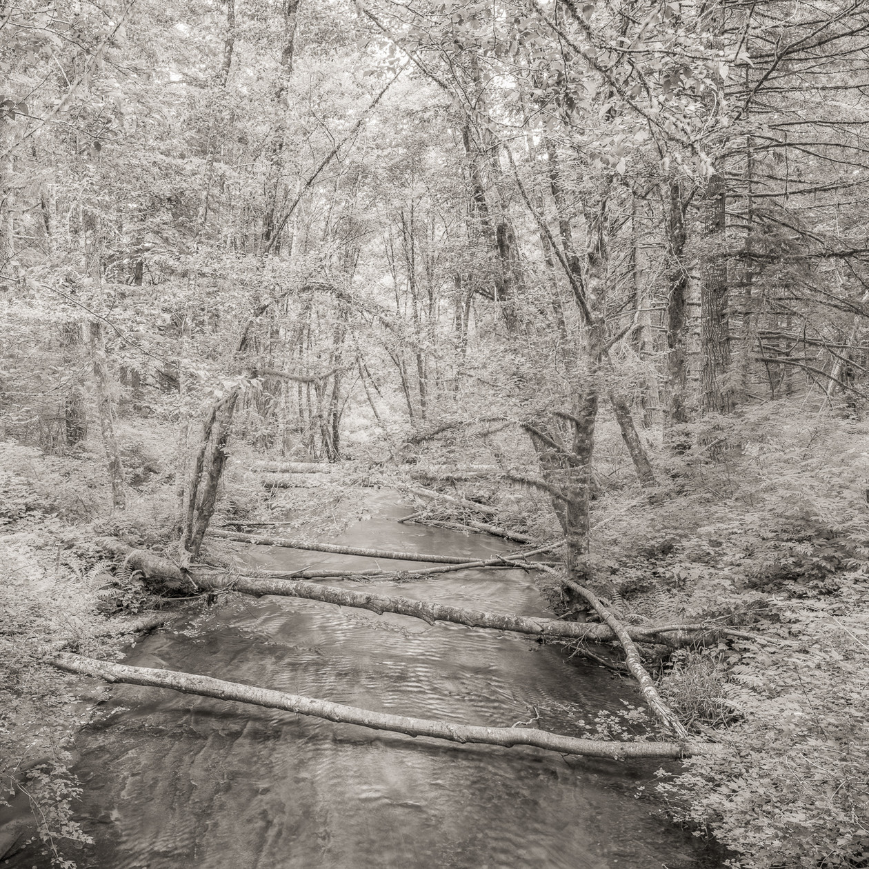 Forest and Stream, Alsea (2013) by Jeffrey Conley