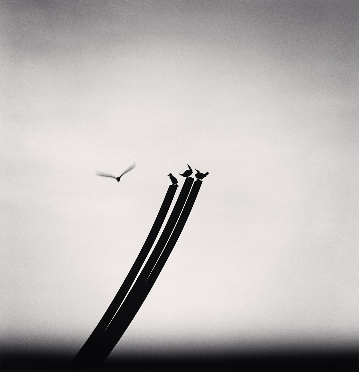 Four Birds, St. Nazaire (2000) by Michael Kenna