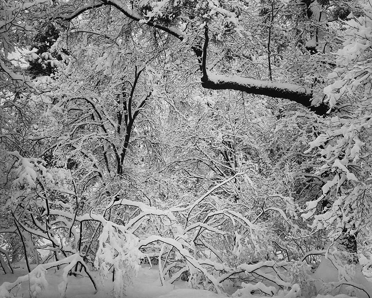 Fresh Snow, Yosemite Valley, California (c. 1947) by Ansel Adams