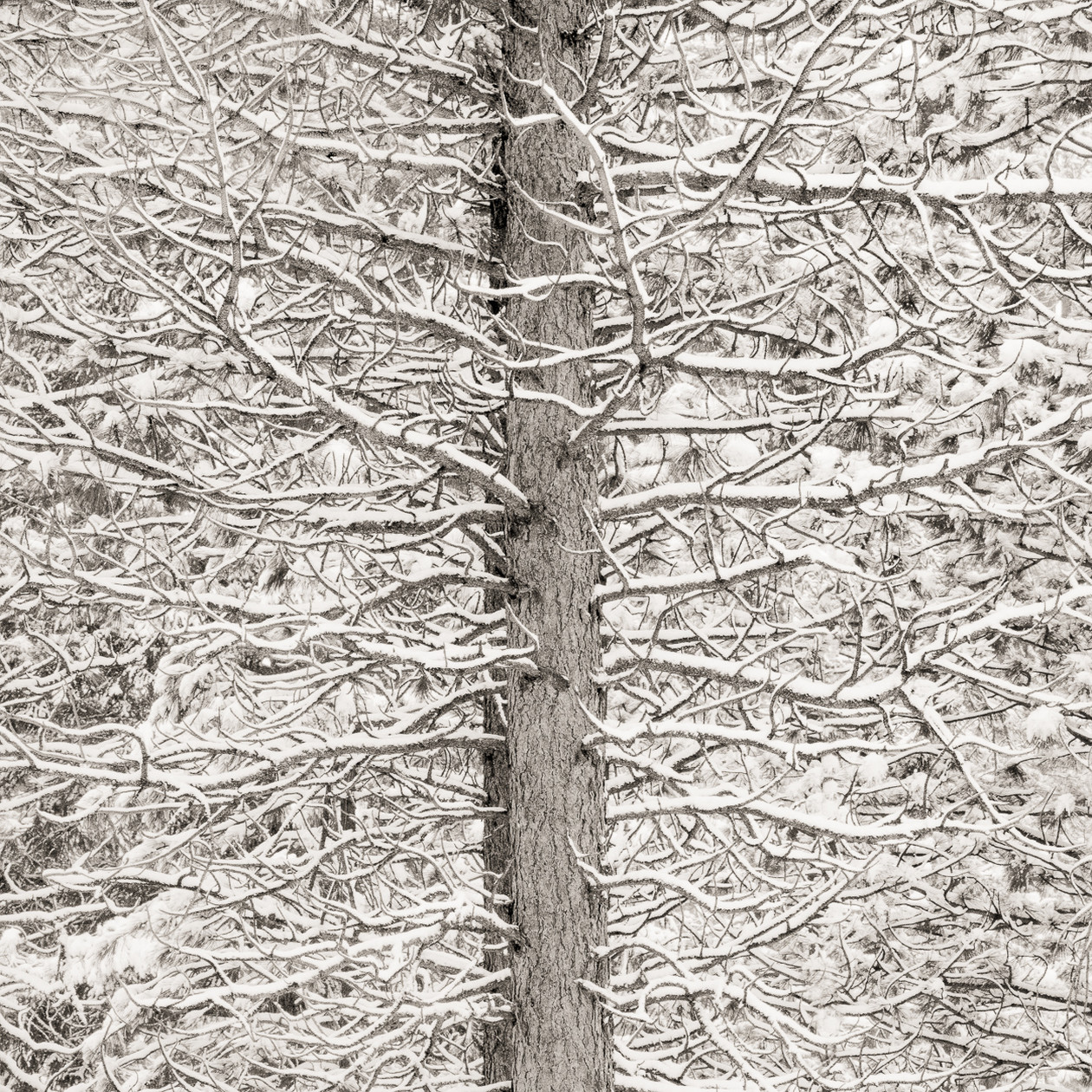 Trees and Snow Mosaic (2009) by Jeffrey Conley