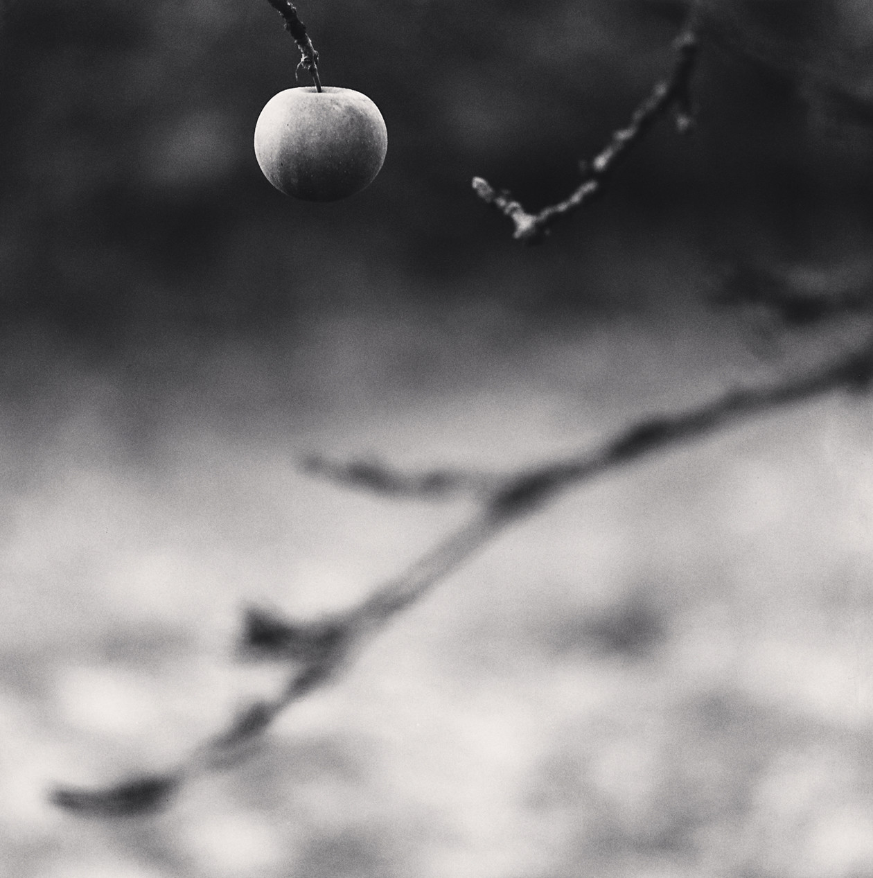 Winter Apple, Chateau de Haoure, Lorraine (2013) by Michael Kenna