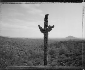 Bullet riddled saguaro, near fountain hills, Arizona 11/21/82   (1982) by Mark Klett
