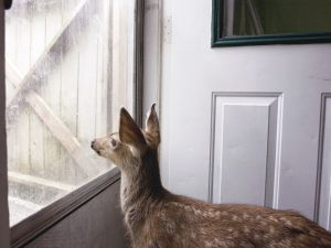 Fawn Looking into Spring (2007) by Annie Marie Musselman