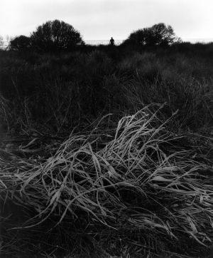Untitled (grasses) (1966) by Jerry Uelsmann