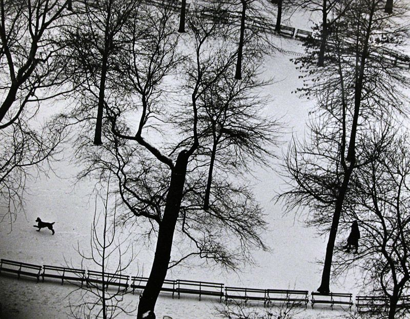 New York [Washington Square Park w/ snow & dog], 1-17-65 (1965) by André Kertész