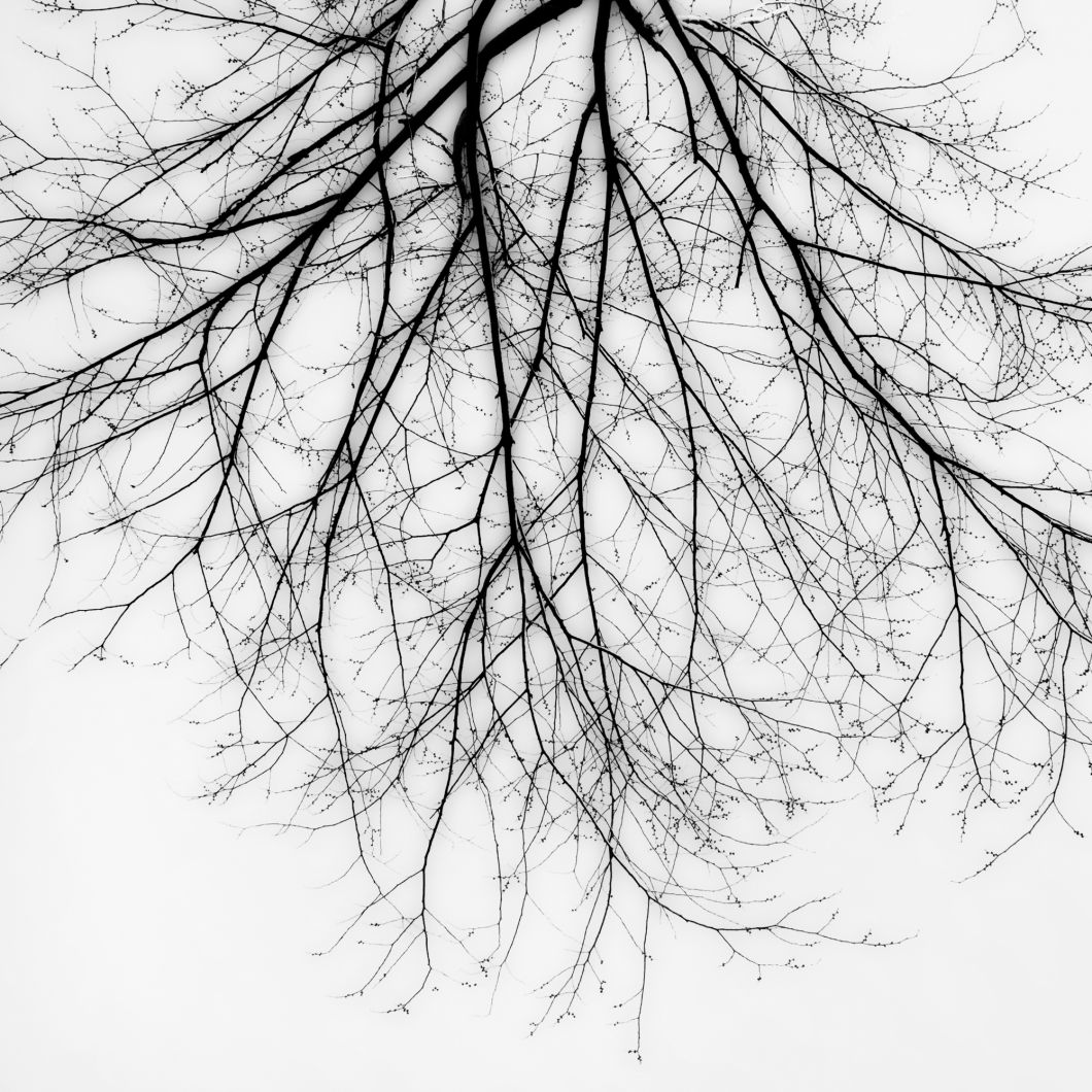 Branch Silhouette (2010) by Jeffrey Conley