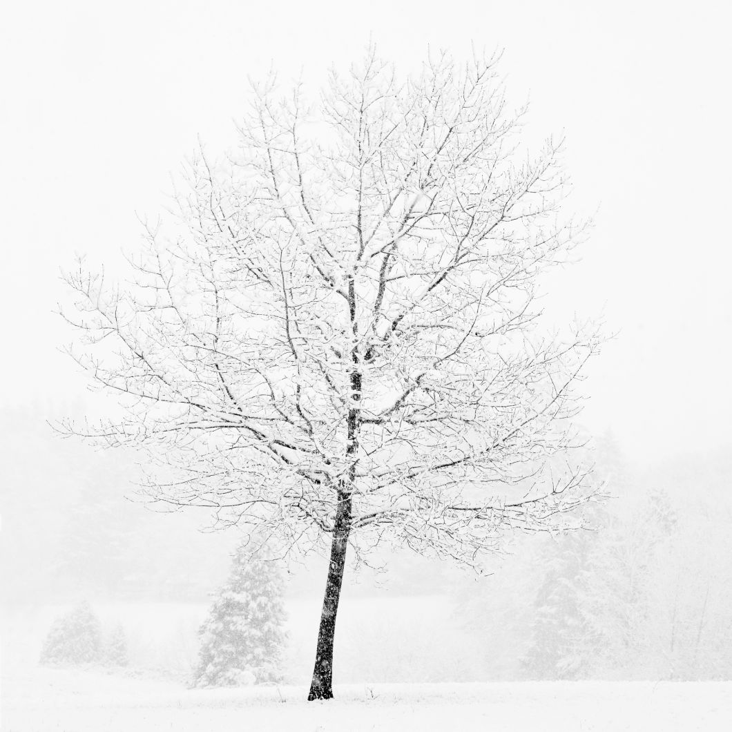 Lone Tree in Snow (2007) by Jeffrey Conley