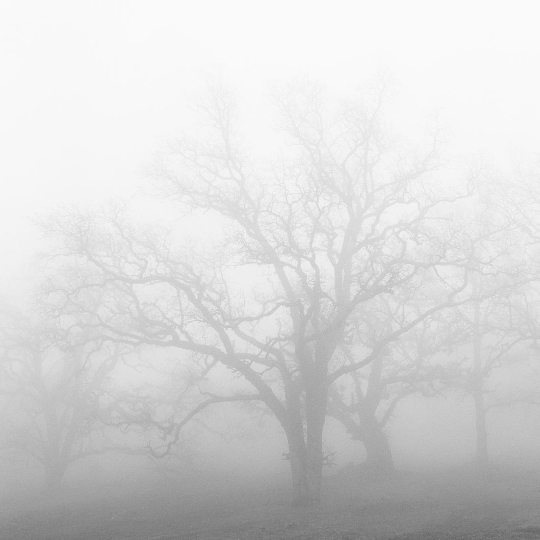 Oak and Fog (1998) by Jeffrey Conley