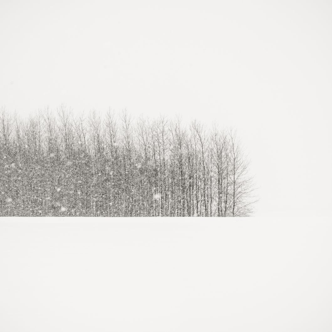Trees in Winter Field, Oregon (2014) by Jeffrey Conley