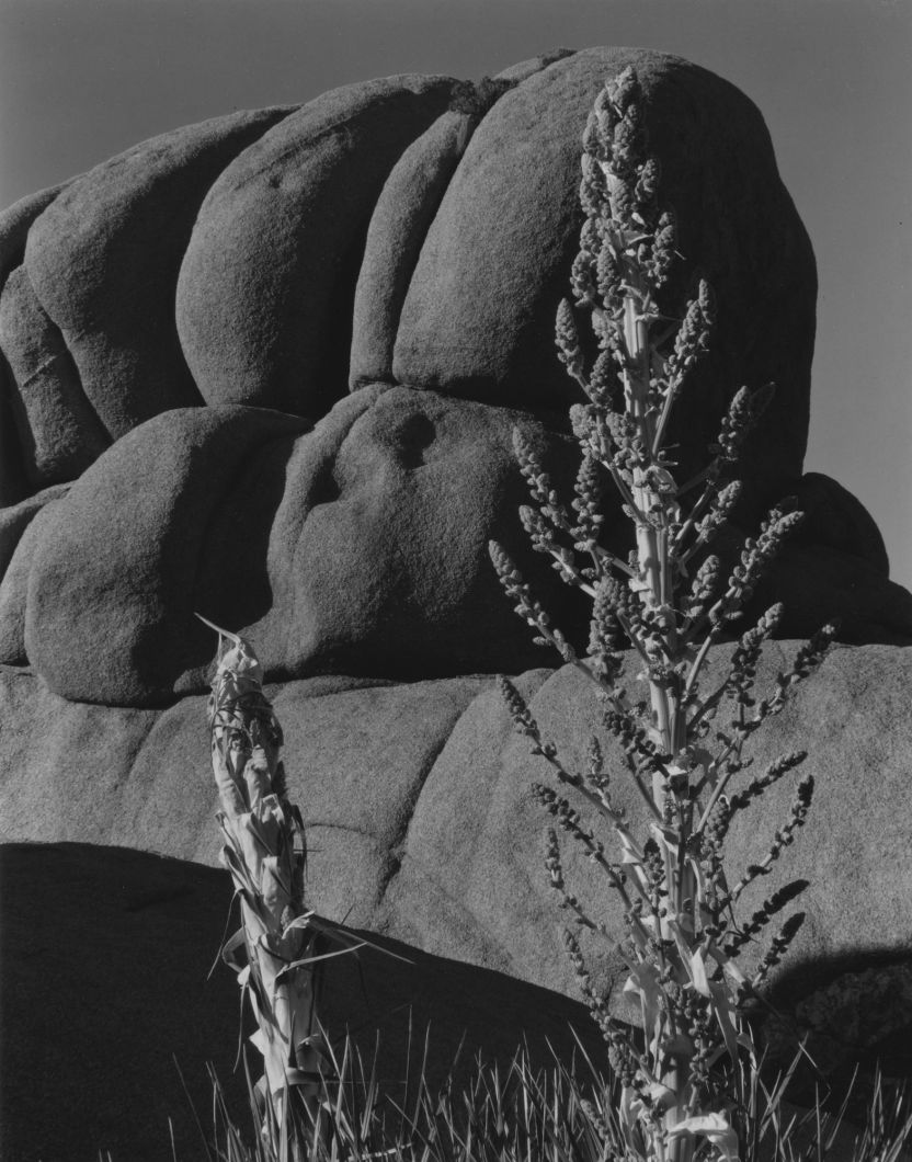 Wonderland of Rocks (1937) by Edward Weston