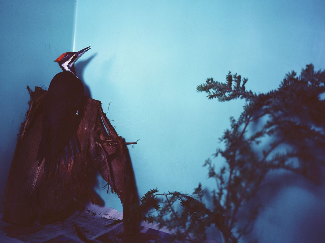 Woodpecker (2009) by Annie Marie Musselman