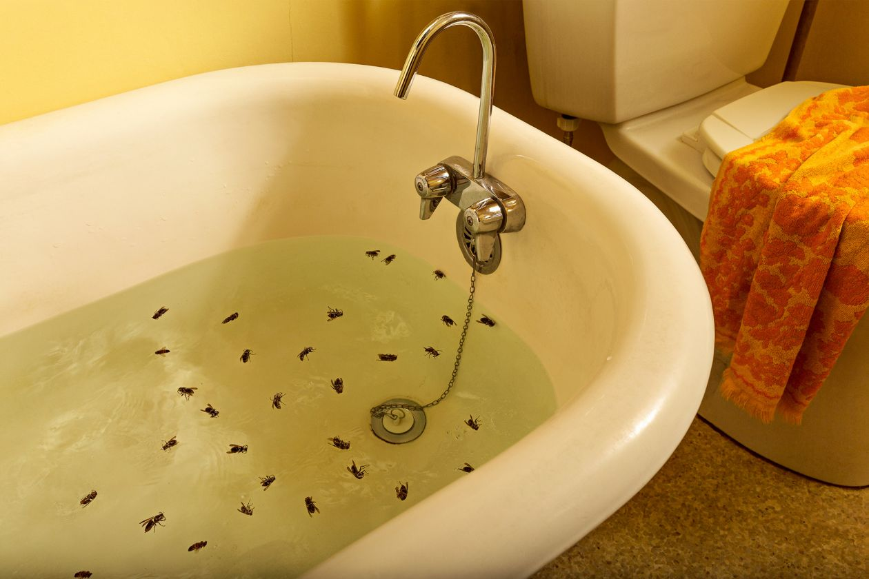 The Summer of the Hornets #6 (Hornets in Tub) (2015) by Holly Andres