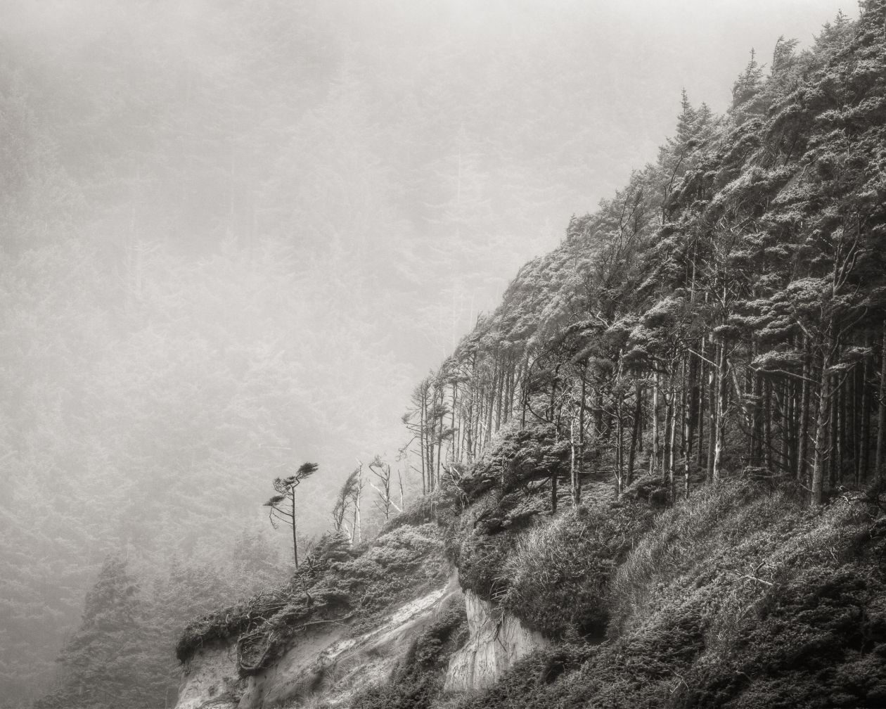 Windswept Trees, Pacific Coast (2011) by Jeffrey Conley