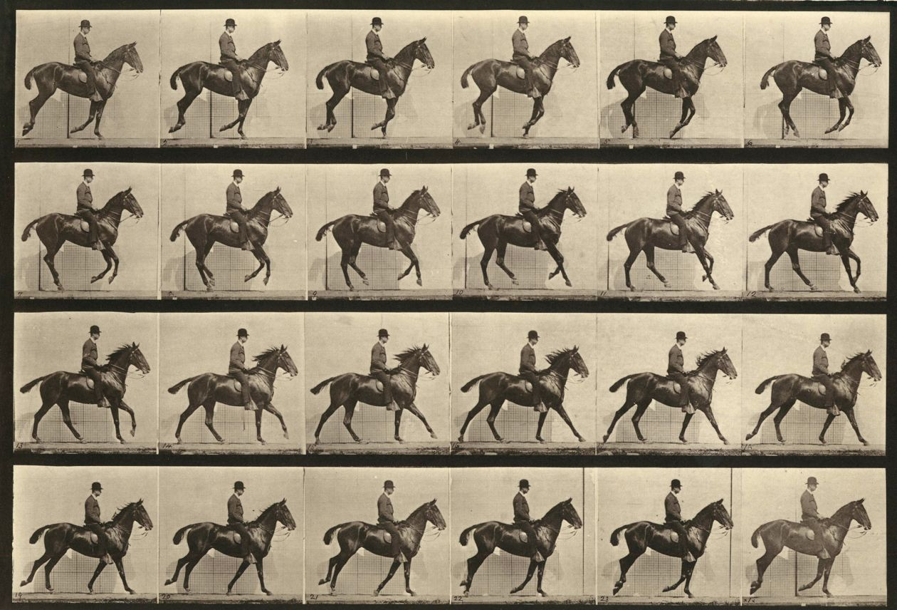 from Animal Locomotion (Plate 616) (1887) by Eadweard Muybridge