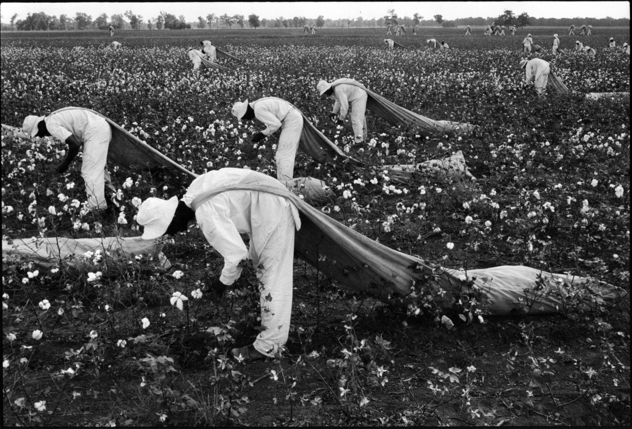 Cotton Pickers (1967-68) by Danny Lyon